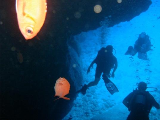 Dive Pic